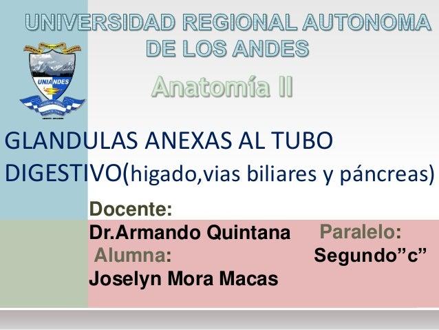 Docente: Dr.Armando Quintana GLANDULAS ANEXAS AL TUBO DIGESTIVO(higado,vias biliares y páncreas) Alumna: Joselyn Mora Maca...