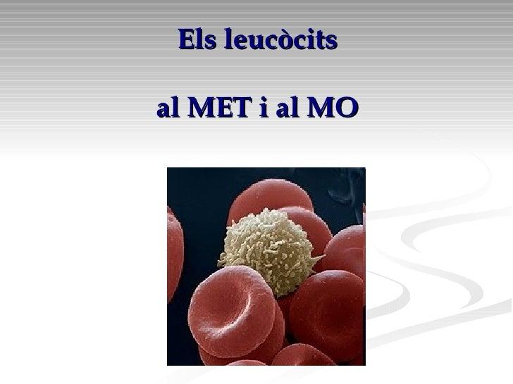 Els leucòcits   al MET i al MO
