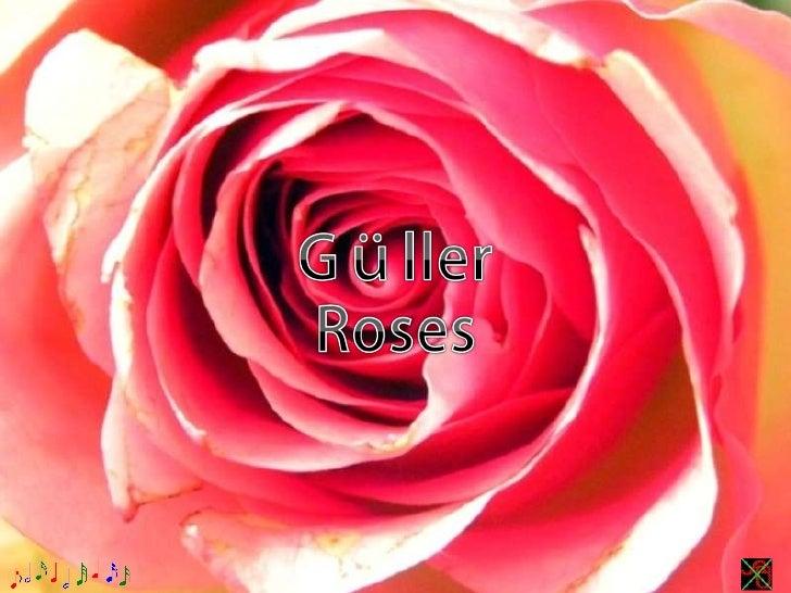 Güller,Roses