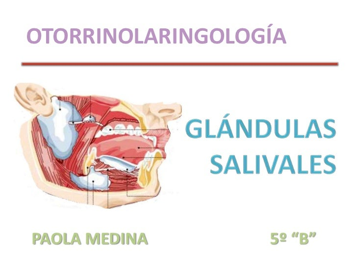 "OTORRINOLARINGOLOGÍA<br />GLÁNDULAS SALIVALES<br />PAOLA MEDINA      5º ""B""<br />"