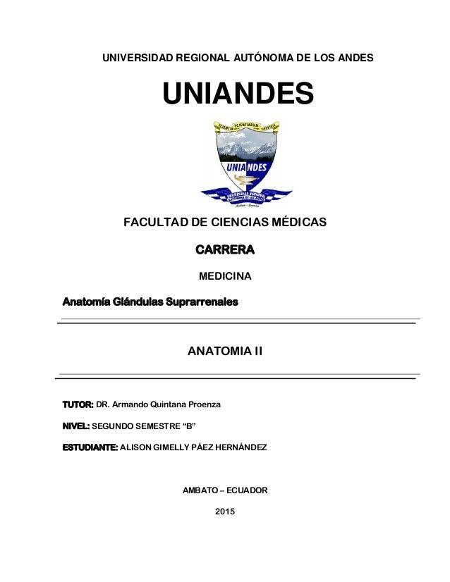 UNIVERSIDAD REGIONAL AUTÓNOMA DE LOS ANDES UNIANDES FACULTAD DE CIENCIAS MÉDICAS CARRERA MEDICINA Anatomía Glándulas Supra...