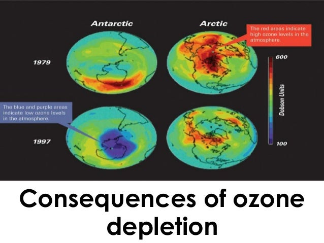 a description of the ozone depletion and its consequences What are the effects of ozone depletion a:  the depletion of atmospheric ozone also has detrimental effects on animals and the natural environment developmental processes in plant life can be altered by uvb rays, resulting in decreased growth  environmental effects of ozone depletion consequences of ozone depletion.