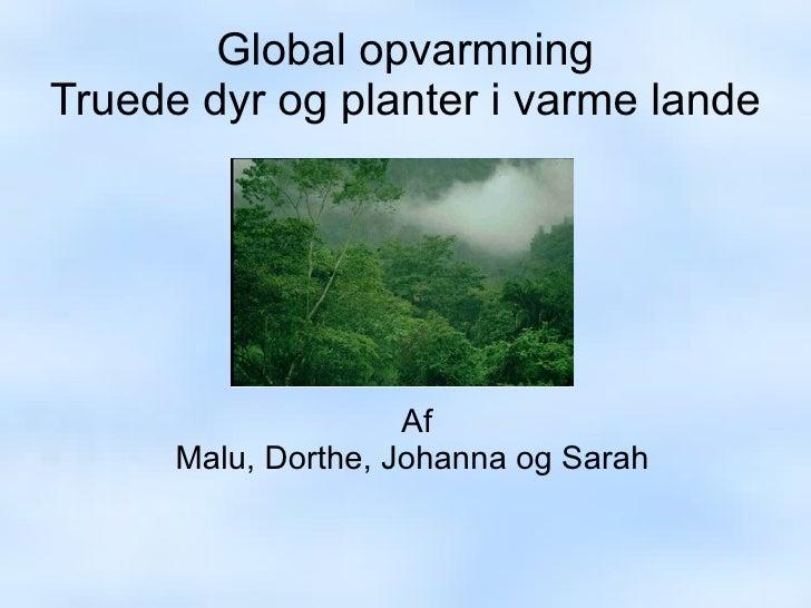 Global opvarmning Truede dyr og planter i varme lande Af Malu, Dorthe, Johanna og Sarah