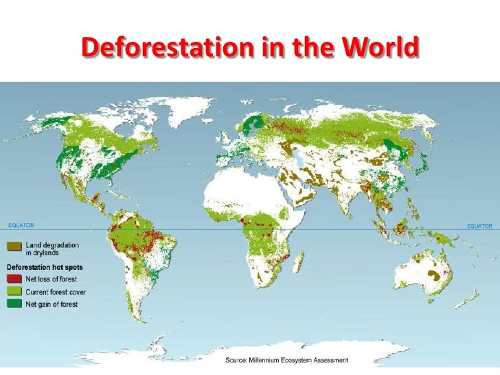 effects of rainforest deforestation