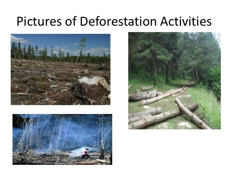 the negative effects of deforestation 14032012 there are some many effects of deforestation like:-tree holds soil if we cut trees then the soil holding capacity will became lessit may occurs landslide.