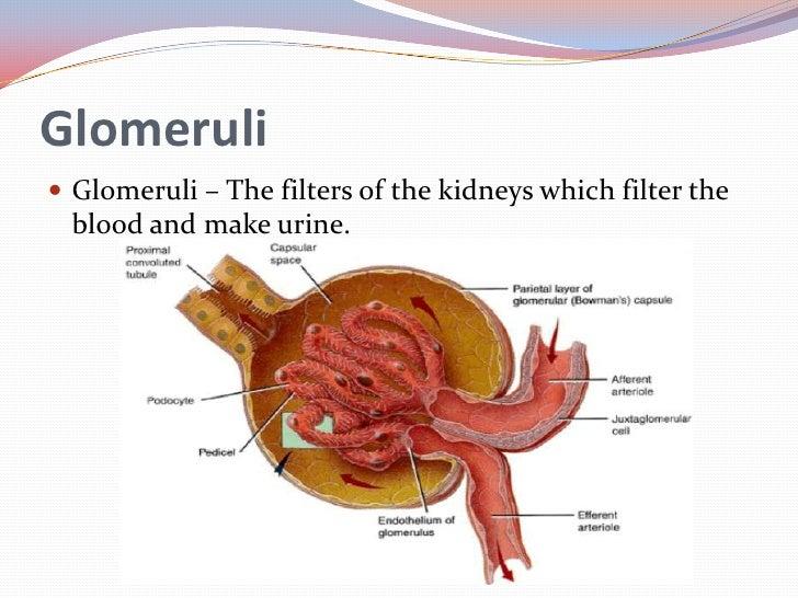 Glomerulonephritis 3811454