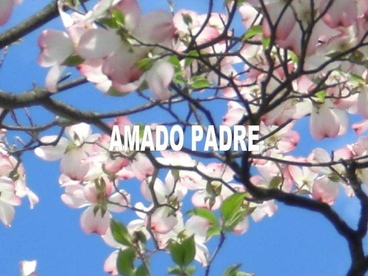 AMADO PADRE