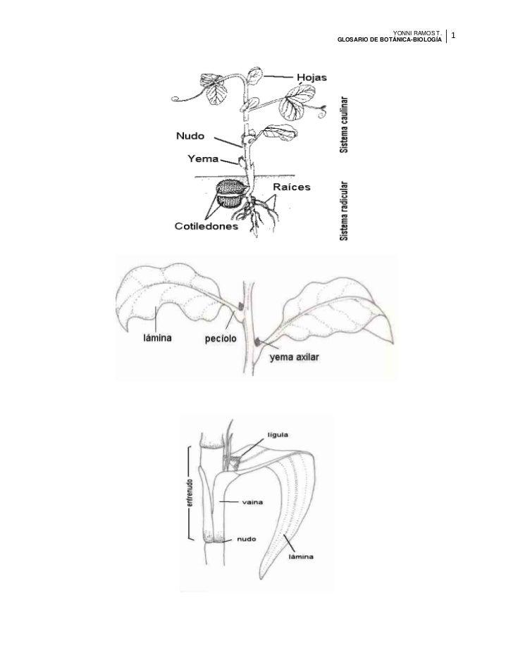 Glosario de botánica y fisiología