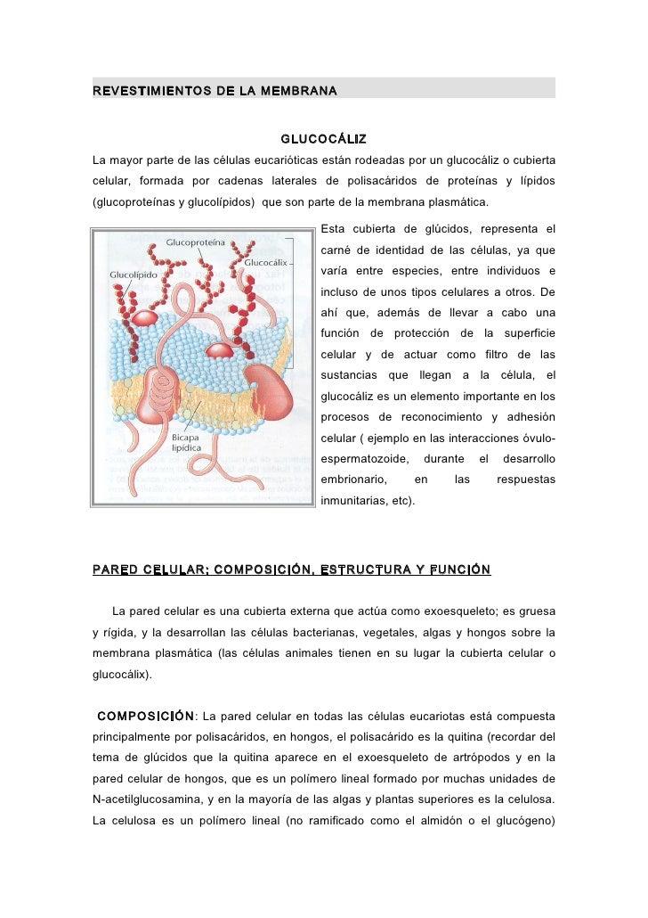 REVESTIMIENTOS DE LA MEMBRANA                                   GLUCOCÁLIZLa mayor parte de las células eucarióticas están...