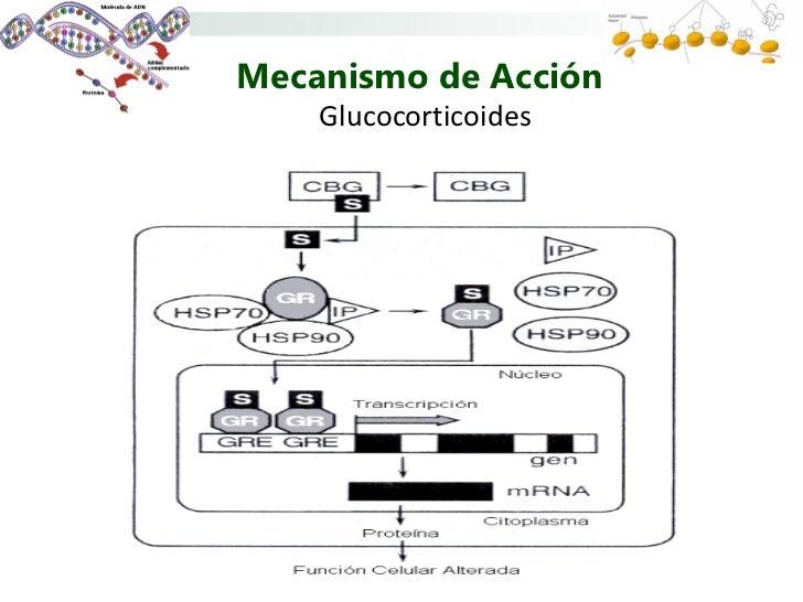 antiinflamatorios esteroides inhalados
