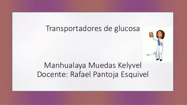 Transportadores de glucosa  Manhualaya Muedas Kelyvel  Docente: Rafael Pantoja Esquivel