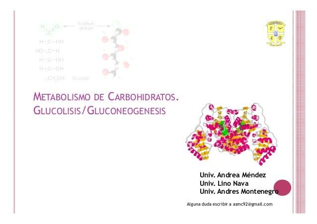 METABOLISMO DE CARBOHIDRATOS.GLUCOLISIS/GLUCONEOGENESIS                                     Univ. Andrea Méndez           ...