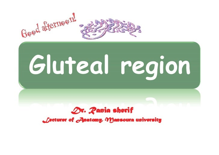 Gluteal region          Dr. Rania sherif Lecturer of Anatomy, Mansoura university