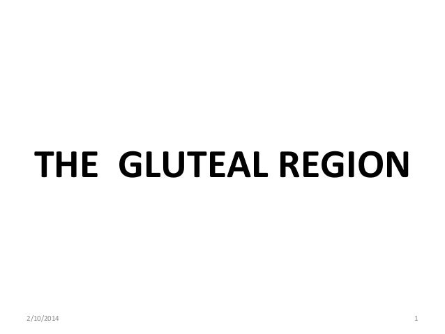 THE GLUTEAL REGION  2/10/2014  1