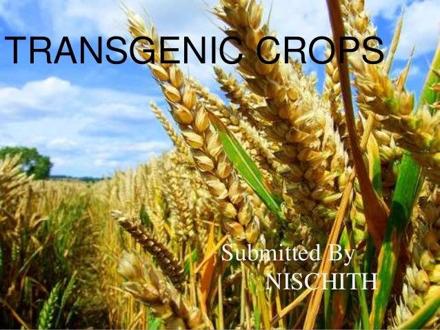 transgenic plants and animals - photo #43