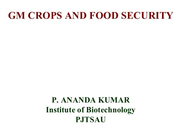 essays on genetically modified crops and food security Genetically modified foods 7 pages 1728 words november 2014 saved essays save your essays here so you can locate them quickly.
