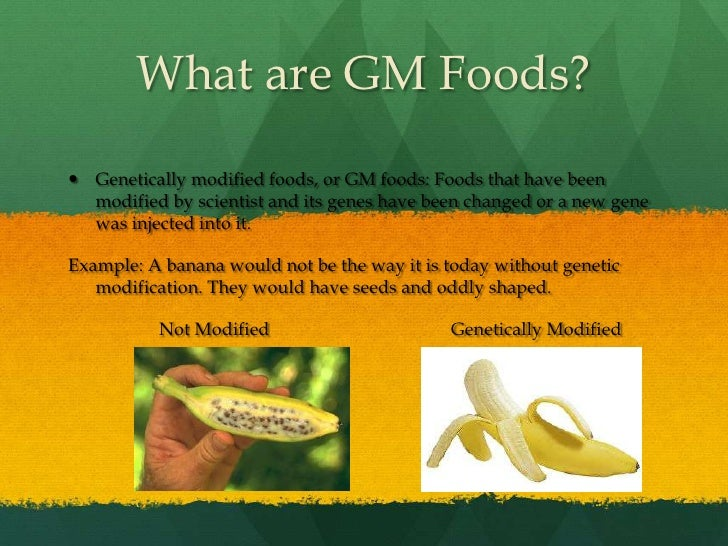 genetically modified food gm food 2013-12-14 genetically modified crops food fight  the ministry of agriculture was also said to be preparing a new public-education campaign on the merits of gm food.