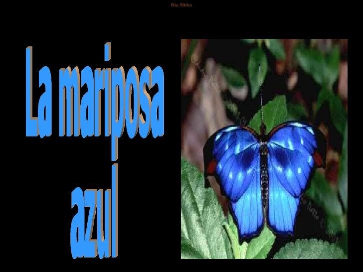 G:\Monica\La Mariposa Azul 1  2