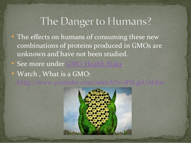 the danger of genetically modified organisms essay