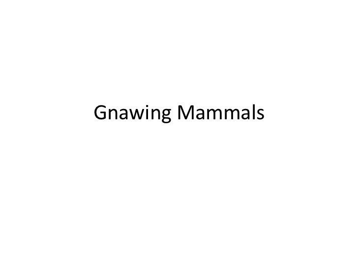 Gnawing Mammals<br />