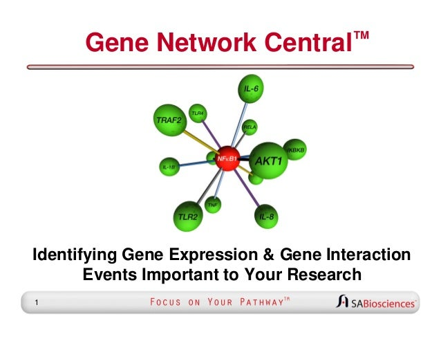 Gene Network  ™ Central  Identifying Gene Expression & Gene Interaction Events Important to Your Research 1