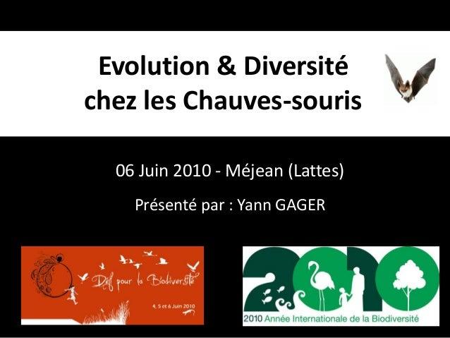 06 Juin 2010 - Méjean (Lattes) Evolution & Diversité chez les Chauves-souris Présenté par : Yann GAGER
