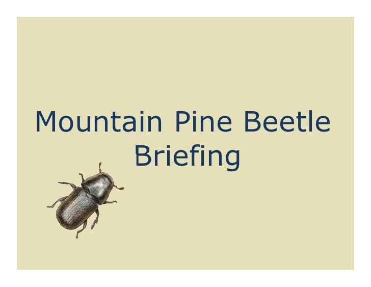Mountain Pine Beetle      Briefing