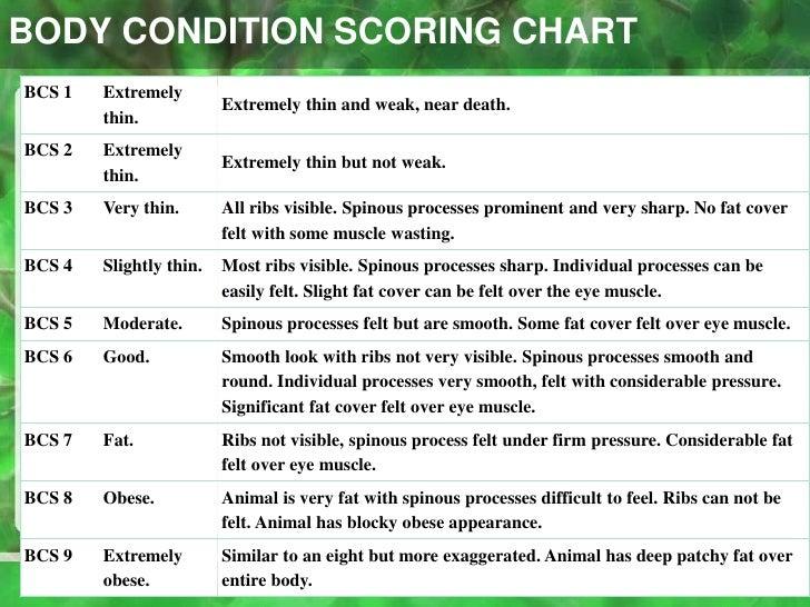 newborn feeding chart