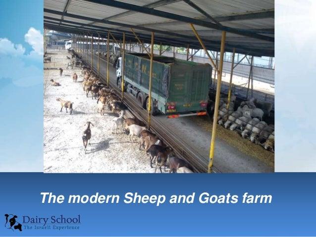 Sheep farm business plan