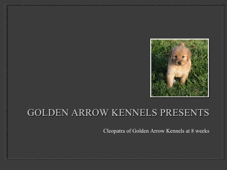 Golden Arrow Kennels Presentation 1