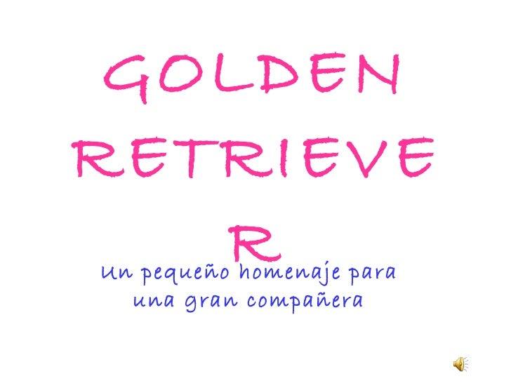 GOLDEN RETRIEVER Un pequeño homenaje para una gran compañera