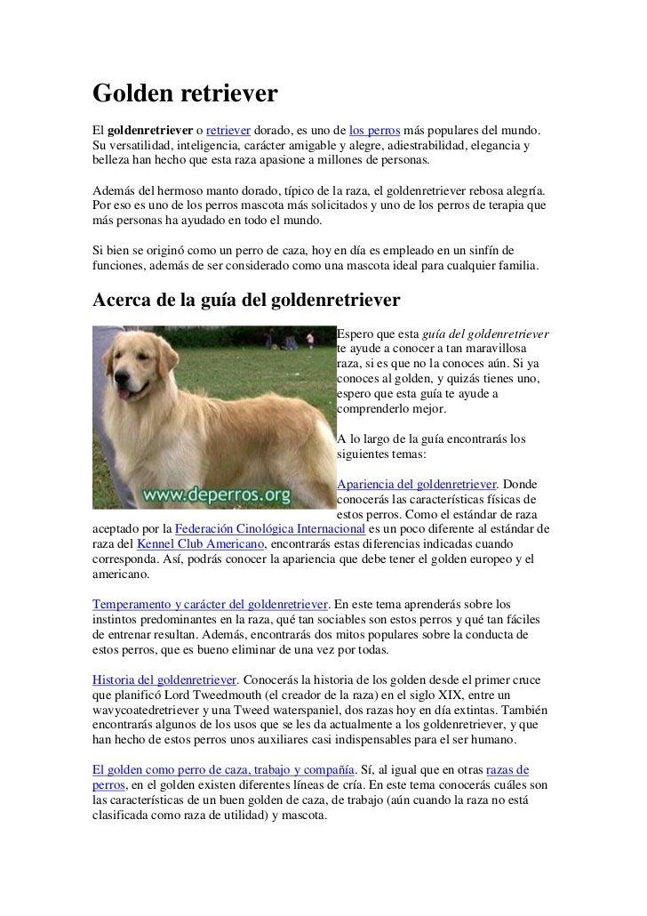 Golden retrieverEl goldenretriever o retriever dorado, es uno de los perros más populares del mundo.Su versatilidad, intel...