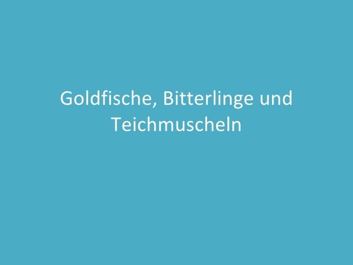 Goldfische, Bitterlinge und Teichmuscheln