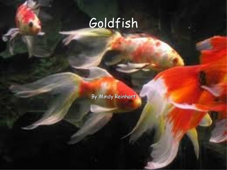 Mindy's Goldfish PowerPoint