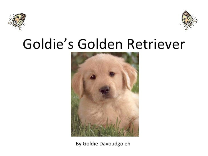 Goldie's Golden Retriever By Goldie Davoudgoleh