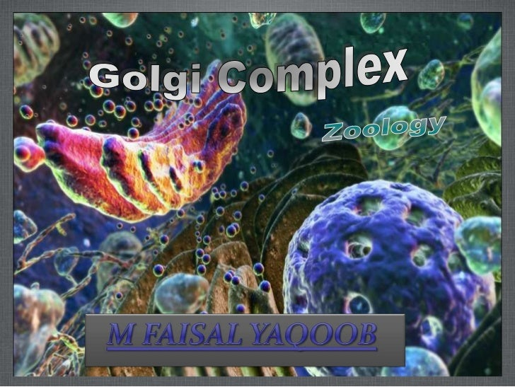 OUTLINEIntroductionDiscoveryMorphology      Cisternae      Cis-Face      Trans-FaceFunctionsWorking Of Golgi ComplexTransp...