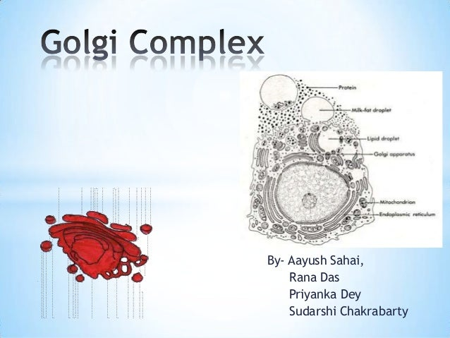Golgi complex structure and functions