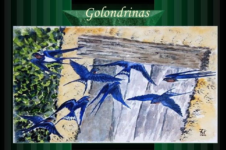 66-Golondrinas