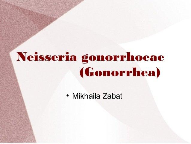 Neisseria gonorrhoeae (Gonorrhea) ●  Mikhaila Zabat
