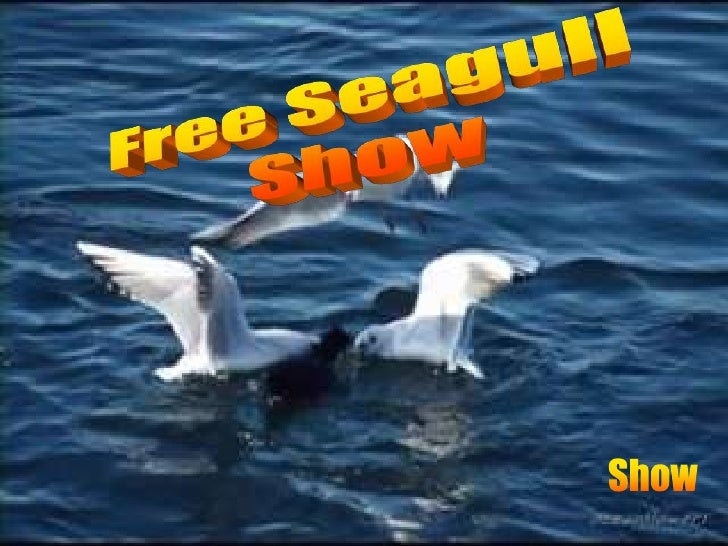 Free Seagull<br />Show<br />Show<br />