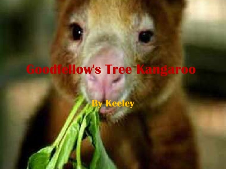 Goodfellow's Tree Kangaroo <br />By Keeley<br />