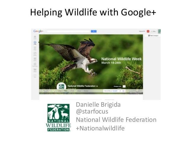 Helping Wildlife with Google+          Danielle Brigida          @starfocus          National Wildlife Federation         ...