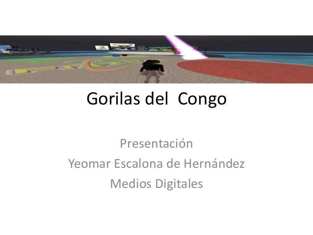 Gorilas del  congo presentacion