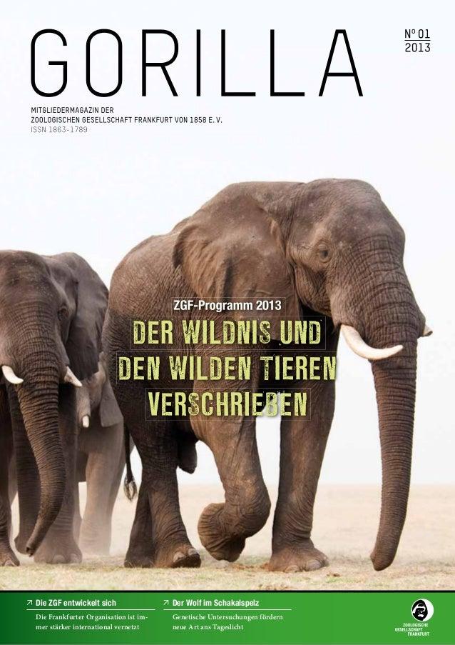 Die ZGF entwickelt sich                Der Wolf im SchakalspelzDie Frankfurter Organisation ist im-   Genetische Untersuch...