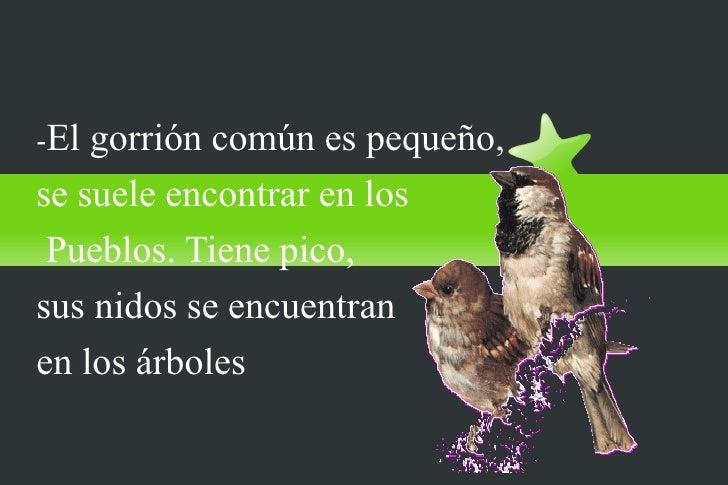 El gorrión común-El gorrión común es pequeño,se suele encontrar en los Pueblos. Tiene pico,sus nidos se encuentranen los á...