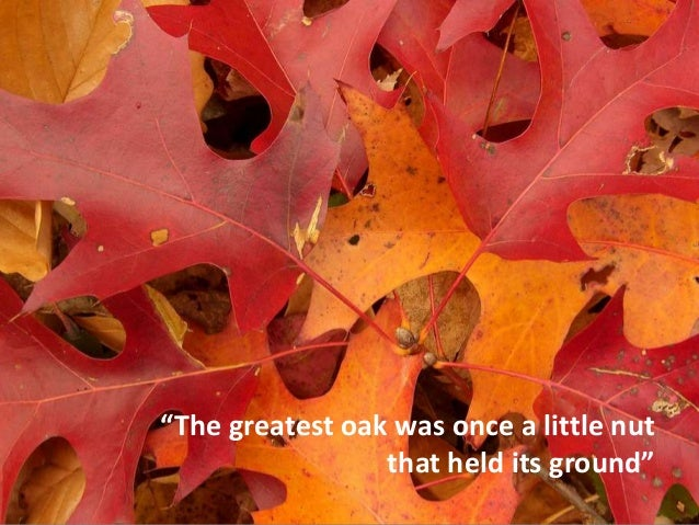 """The greatest oak was once a little nut that held its ground"""