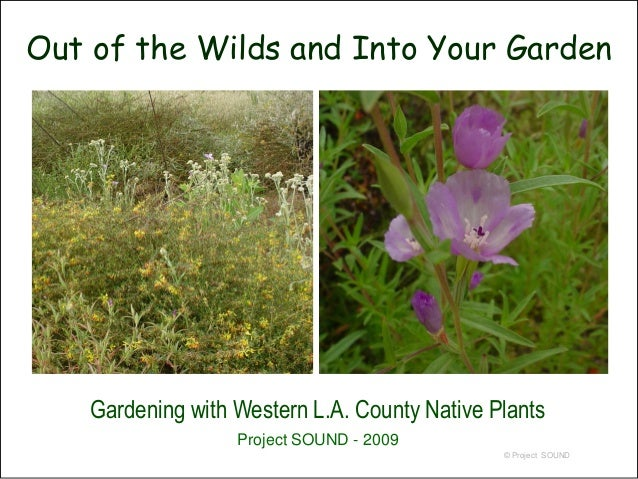Out of the Wilds and Into Your Garden    Gardening with Western L.A. County Native Plants                   Project SOUND ...