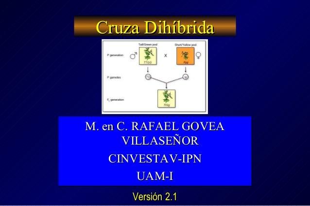 Cruza DihíbridaCruza Dihíbrida M. en C. RAFAEL GOVEAM. en C. RAFAEL GOVEA VILLASEÑORVILLASEÑOR CINVESTAV-IPNCINVESTAV-IPN ...