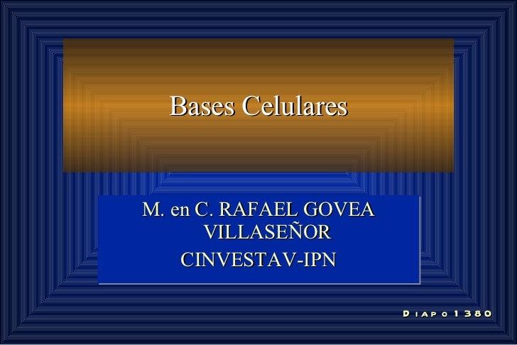 Bases Celulares M. en C. RAFAEL GOVEA VILLASEÑOR CINVESTAV-IPN Diapo 1380