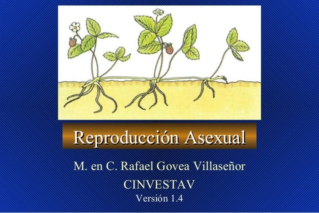 Reproducción AsexualReproducción Asexual M. en C. Rafael Govea Villaseñor CINVESTAV Versión 1.4